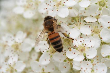 manuka honey for healing