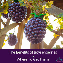The Benefits of Boysenberries & Where To Get Them